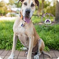 Adopt A Pet :: Duke - Huntersville, NC