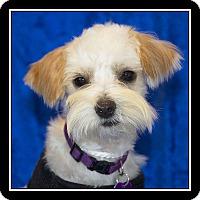 Adopt A Pet :: Tasha - San Diego, CA