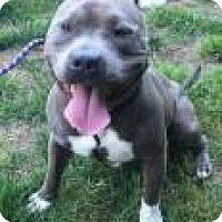 Adopt A Pet :: NORMAN (Auburn) - Bainbridge Island, WA