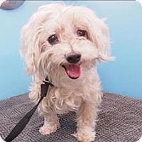Adopt A Pet :: Devin - Portland, OR