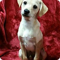 Adopt A Pet :: Archie - Deer Park, TX