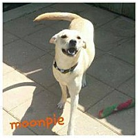 Adopt A Pet :: Moon Pie - Gadsden, AL