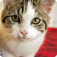Adopt A Pet :: Opal - Gahanna, OH