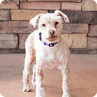 Adopt A Pet :: Kasper - Chandler, AZ