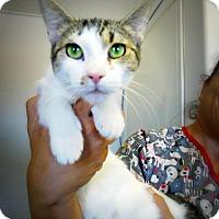 Adopt A Pet :: Jamila - Casa Grande, AZ