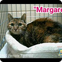 Adopt A Pet :: MARGARET - Naples, FL