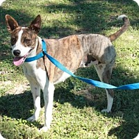 Cattle Dog Mix Dog for adoption in Newark, New Jersey - Penelope