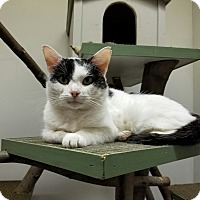 Adopt A Pet :: Arty - Elyria, OH