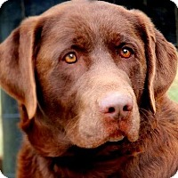 Adopt A Pet :: NOAH(THROWN AWAY!!! PLS READ!! - Wakefield, RI
