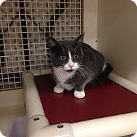Adopt A Pet :: Marvin - Warrenton, MO