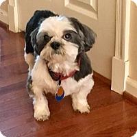 Adopt A Pet :: Willow: MELLOW Girl! - Spring City, TN