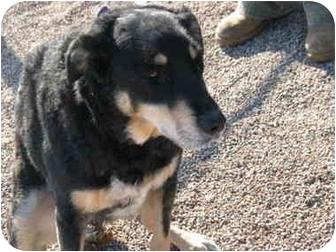 Husky/Labrador Retriever Mix Dog for adoption in Marion, Wisconsin - Frankie