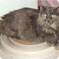 Adopt A Pet :: Nikki - Merrifield, VA