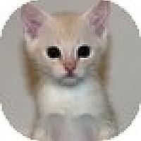 Adopt A Pet :: Gorgie - Vancouver, BC