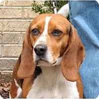 Adopt A Pet :: Lady - Blairstown, NJ