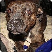 Adopt A Pet :: Mr. Bogart - Nashville, TN