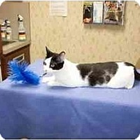 Adopt A Pet :: Charles - Secaucus, NJ