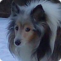 Adopt A Pet :: Duke - Charlottesville, VA