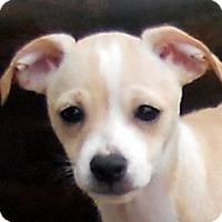 Adopt A Pet :: Baby Rosario - Oakley, CA
