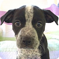 Adopt A Pet :: Logan - La Costa, CA