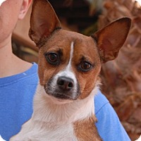 Adopt A Pet :: Spartacus - Las Vegas, NV