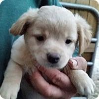 Adopt A Pet :: Benton - Gainesville, FL
