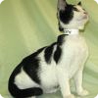 Adopt A Pet :: Murphy - Powell, OH