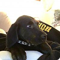 Adopt A Pet :: Marlow - rockford, IL