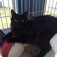 Adopt A Pet :: Hunter and Fisher - Templeton, MA