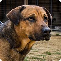 Adopt A Pet :: Buddy - Jasper, AL