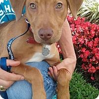 Adopt A Pet :: Martha - Gainesville, FL