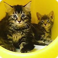 Adopt A Pet :: Faith - Warren, OH
