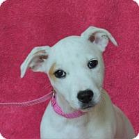 Adopt A Pet :: **ISABELLA** MEET JUNE 25TH! - Mukwonago, WI