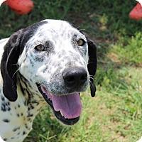 Adopt A Pet :: Delicatessen - Harmony, Glocester, RI
