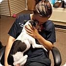Adopt A Pet :: Louie Louie