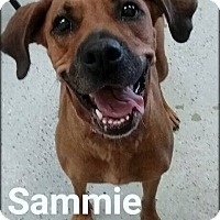 Adopt A Pet :: Sammie - Ottumwa, IA