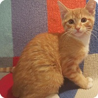 Adopt A Pet :: Andre - Sunderland, ON