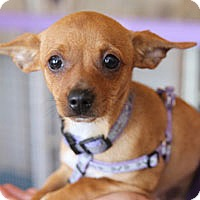 Adopt A Pet :: Betty - Pacific Grove, CA