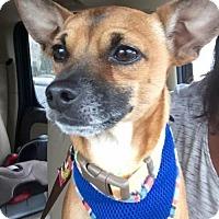 Adopt A Pet :: Rocky - Potomac, MD