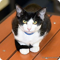 Adopt A Pet :: Flash - Fresno, CA