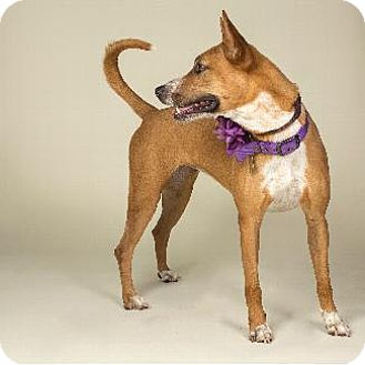 Shepherd (Unknown Type) Dog for adoption in Pt. Richmond, California - TERRI