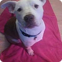 Adopt A Pet :: Gunner - Modesto, CA