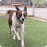 Adopt A Pet :: Cookie - Agoura, CA