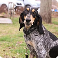 Adopt A Pet :: Hilda - Murphysboro, IL