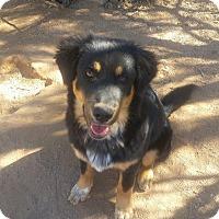 Adopt A Pet :: Snoopy - Tucson, AZ