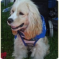 Adopt A Pet :: Garth - Lake Forest, CA