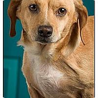 Adopt A Pet :: Atlantis - Owensboro, KY