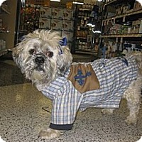 Adopt A Pet :: Buddy - Warwick, NY