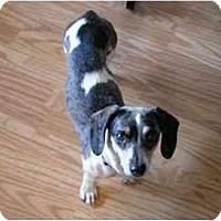 Adopt A Pet :: ELSA - Portland, OR