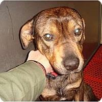 Adopt A Pet :: Tango - Fresno, CA